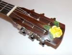 10m guitar p